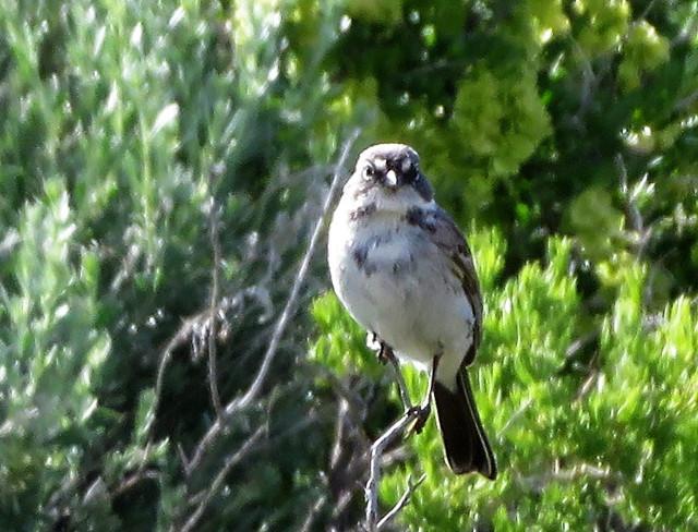 Birding – Fall 2021